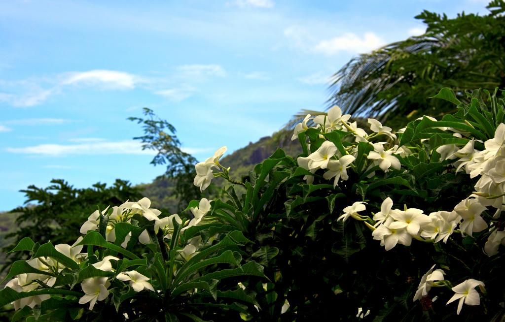 Seychelles flora